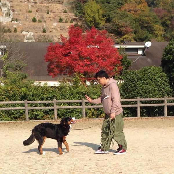 紅葉とトレーニング風景