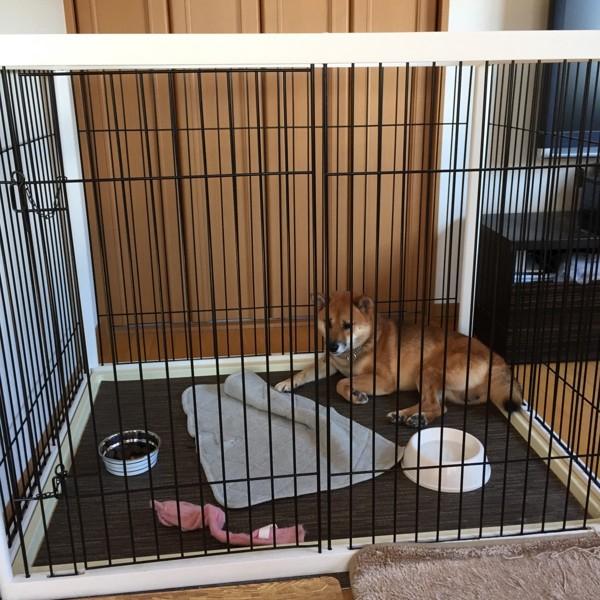 ケージの犬2