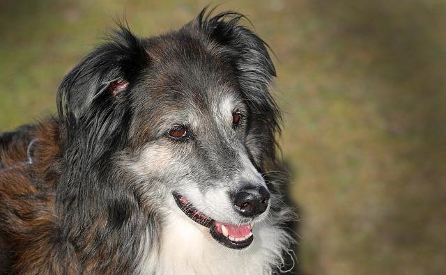 「犬   呼吸」の画像検索結果