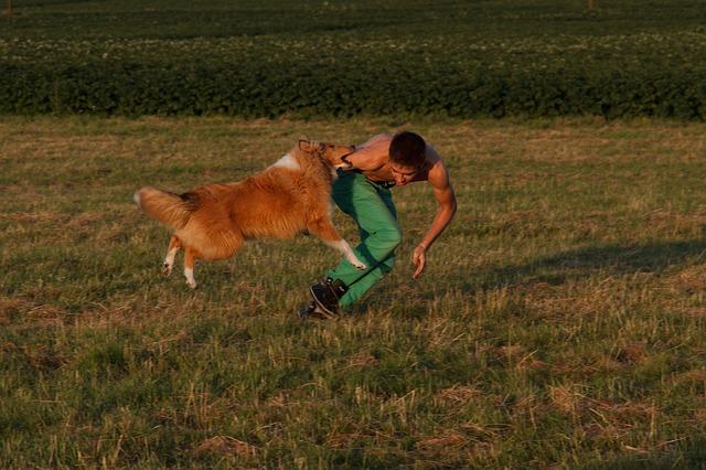 飛び付く犬