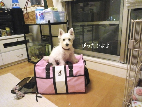 バッグに乗っている犬