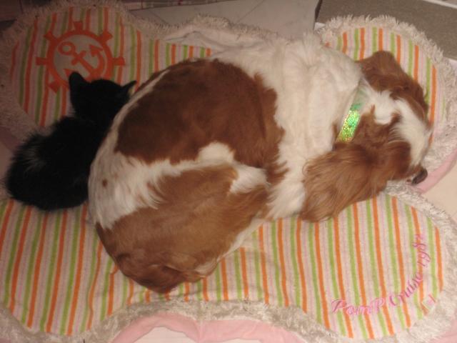 愛犬と子猫2