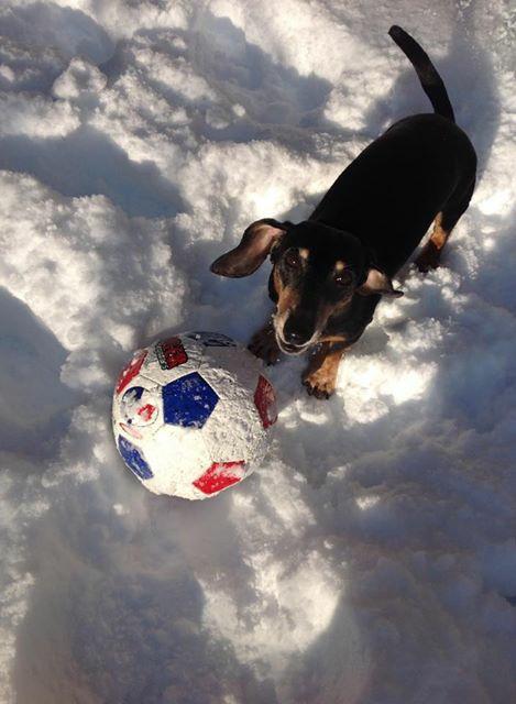 サッカーボールとダックスフンド