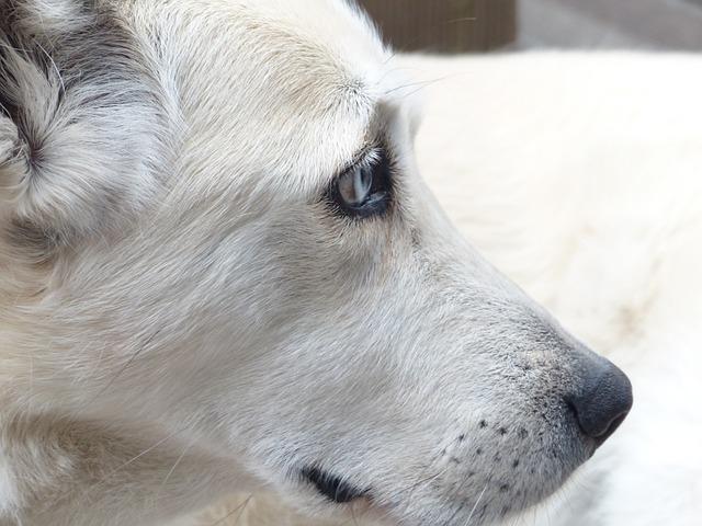 犬の脳腫瘍の症状とは