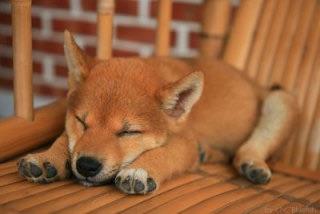 眠っている写真