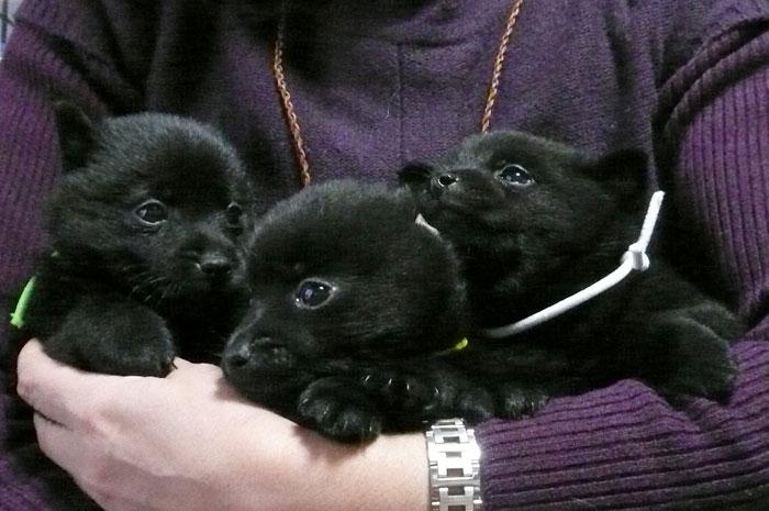 生後14日の愛犬、一番右側