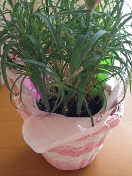 大きめな鉢植え