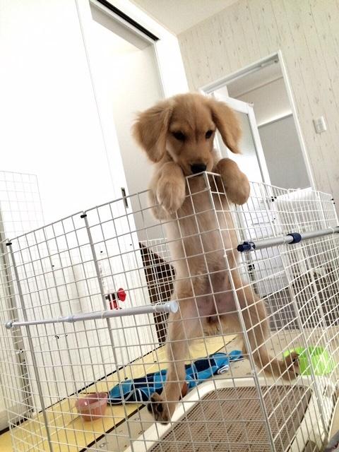 よじ登る愛犬