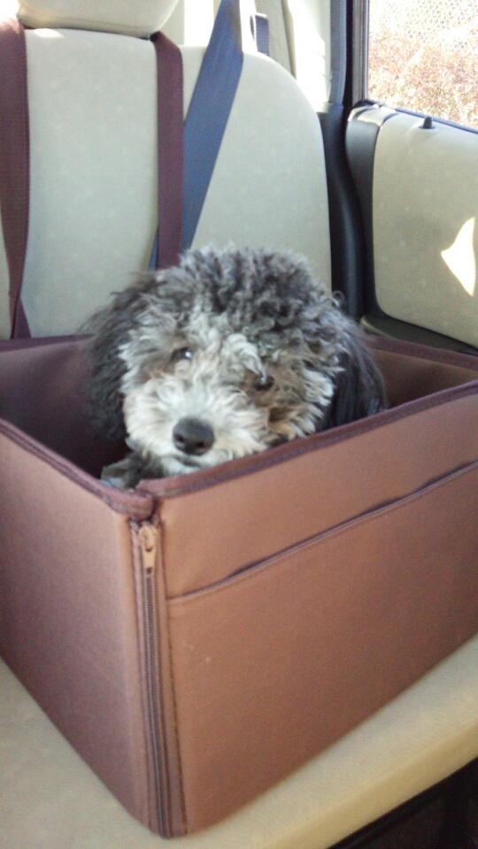 ドライブボックスに入る犬