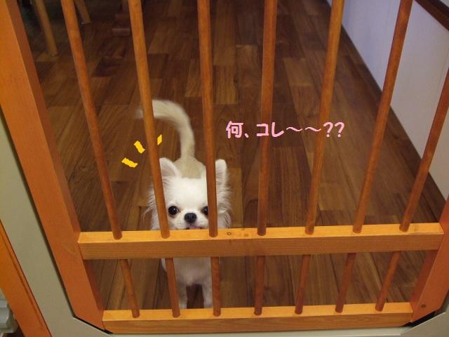 愛犬とのライフスタイル3