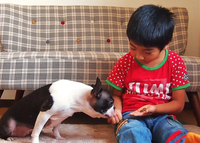 犬におやつをあげる子供