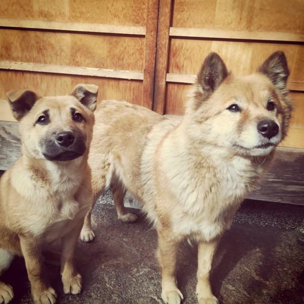 2匹で見上げる犬達
