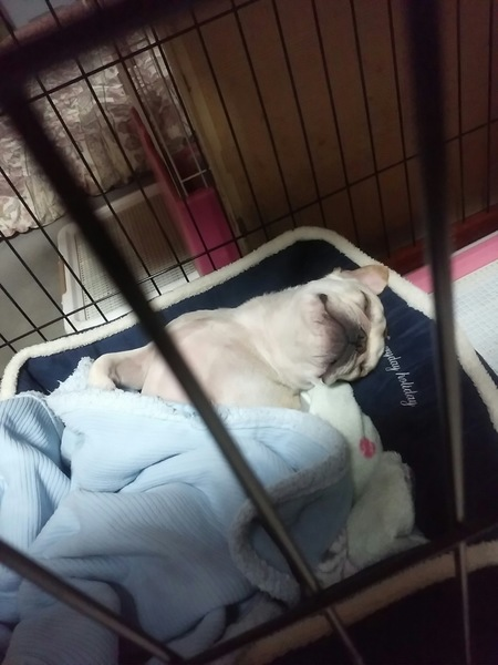 爆睡の愛犬
