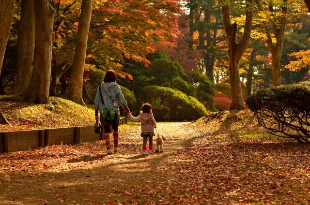 人と犬が散歩している写真