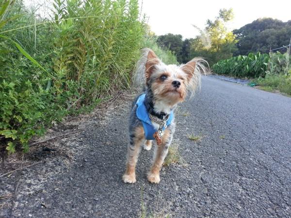 道端の草を見上げる犬