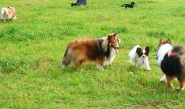 ノーリードで遊んでる犬たちの画像