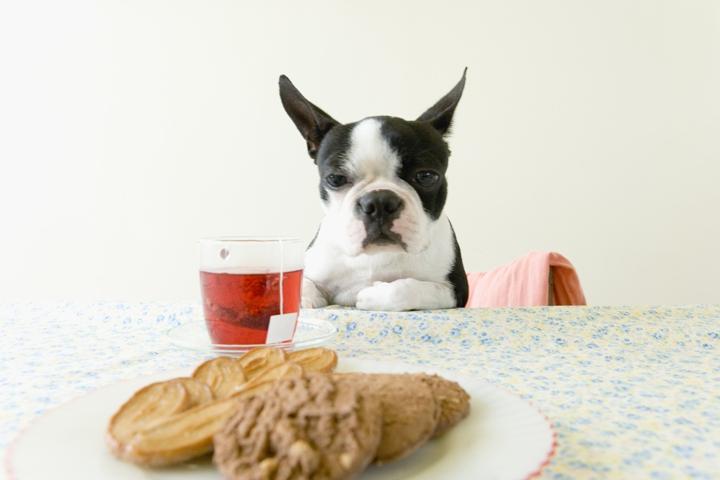 テーブルを見る犬