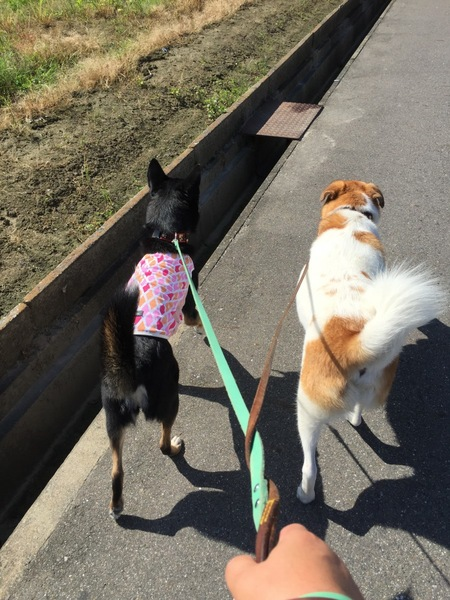 お散歩中の犬