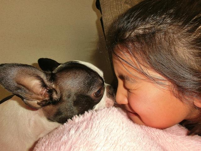 少女と向かい合う犬