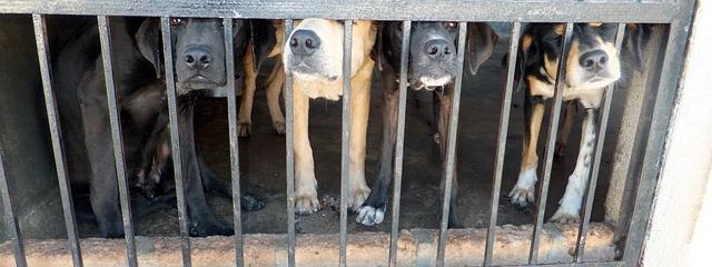 檻の中にいる犬達