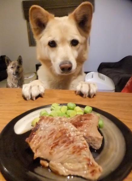 ステーキと犬