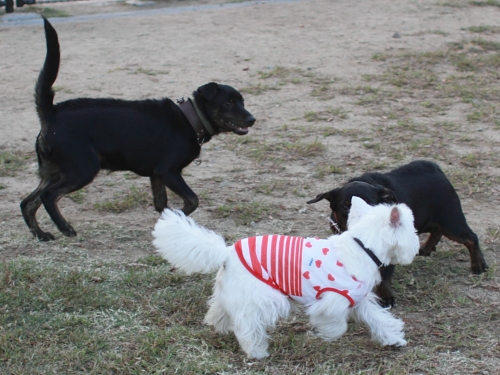 遊ぶ子犬達