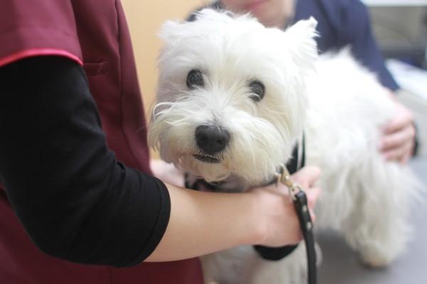 看護師に保定されている犬