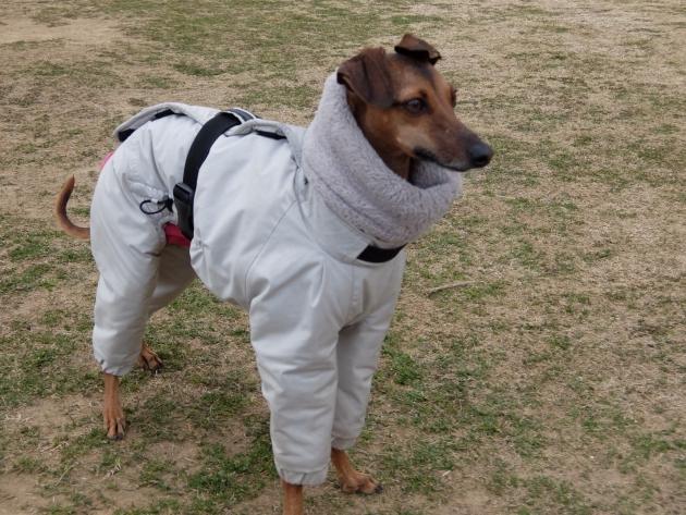 イタグレ用インサレイトスーツ