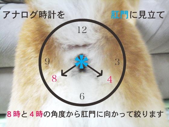 肛門絞りの目安の図