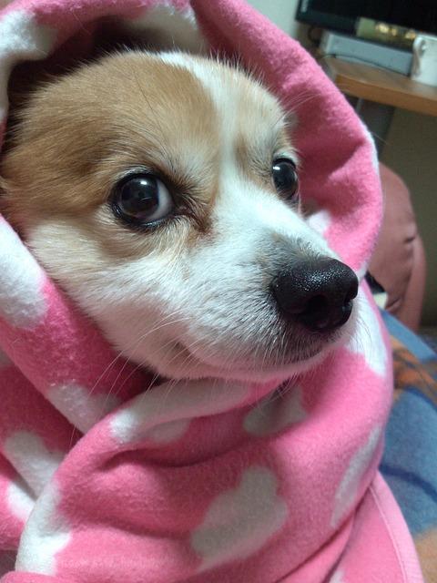 犬の乳腺腫瘍について