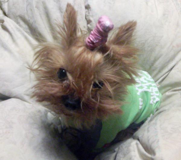 愛犬の死と向き合うために、私は今でも闘っている。