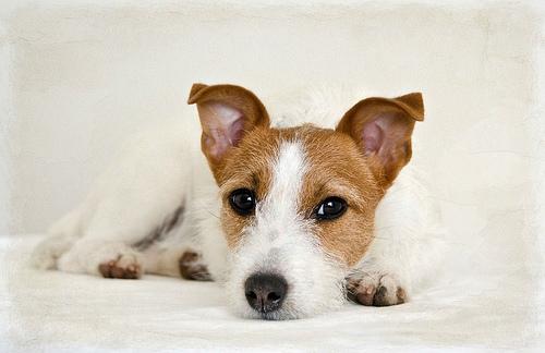 犬の痙攣について