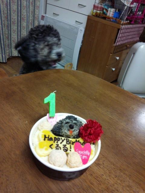 ぶれて口を開けている犬とケーキ