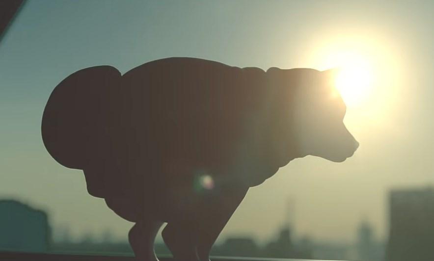 夕日といきむ犬