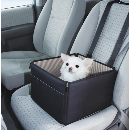 車に乗ってる犬