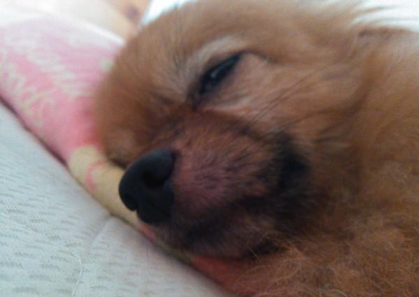 枕をして眠っているアップ
