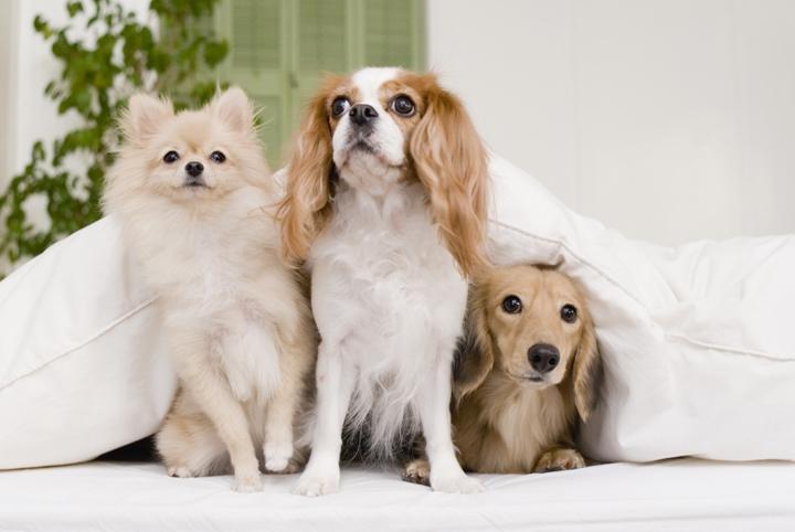 3匹の人気犬