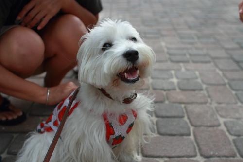 笑顔の白犬