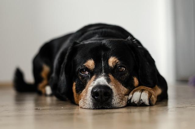 不安な表情の犬