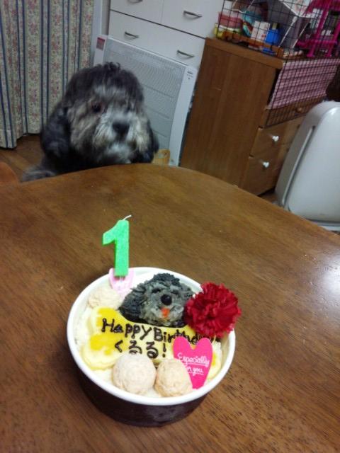 ぶれている犬とケーキ