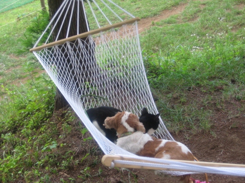 愛犬と子猫3