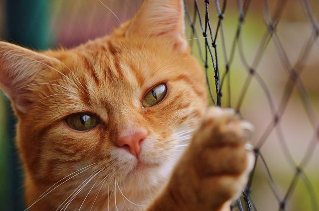 猫(ミックス)