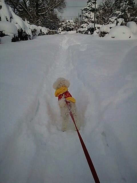 寒くても吹雪でも散歩に出ないと気が済まない犬もいたりして…