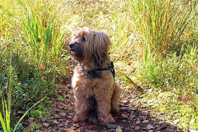 草原にいる犬