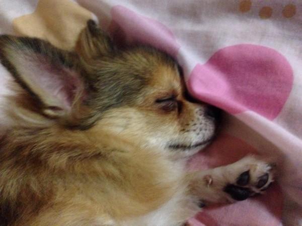 寝ている写真