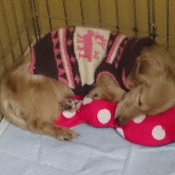 ミニーマウスのリボンクッションで寝ているミニーちゃん