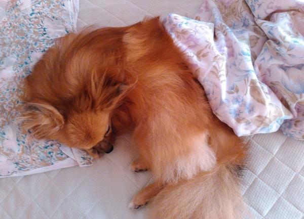 ベッドの上で丸くなって眠っている