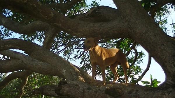 木の上の犬