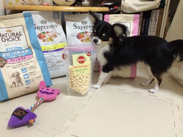 シュプレモがお気に入りな犬