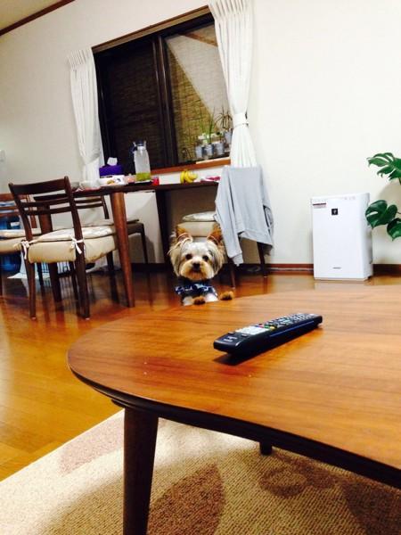 テーブルから顔を出している写真